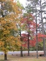 Highlight for album: Fall in Arkansas